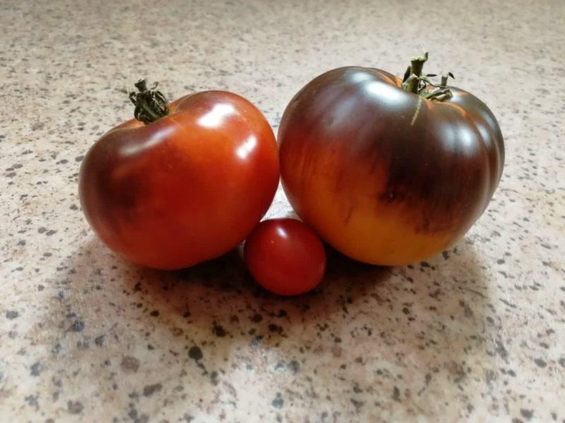 Сорт томата Яркий самоцвет