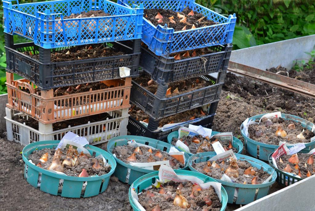 Пластиковые решетчатые ящики и корзины для посадки луковичных