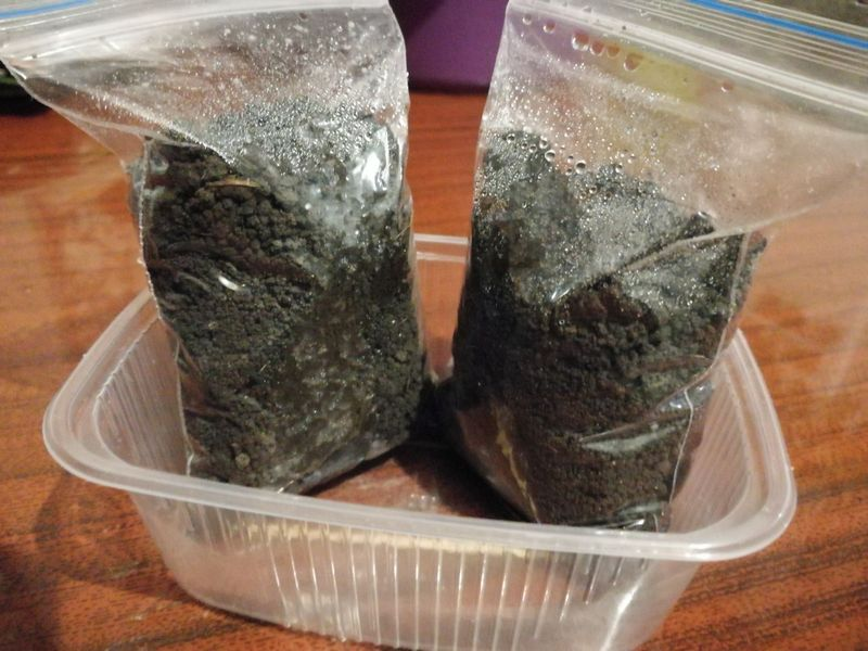 Во что посеять перцы, баклажаны без пикировки