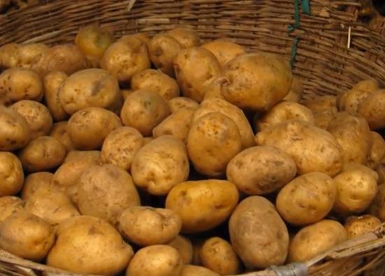 Немецкий сорт картофеля Адретта