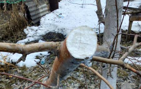 Чем обработать деревья после обрезки